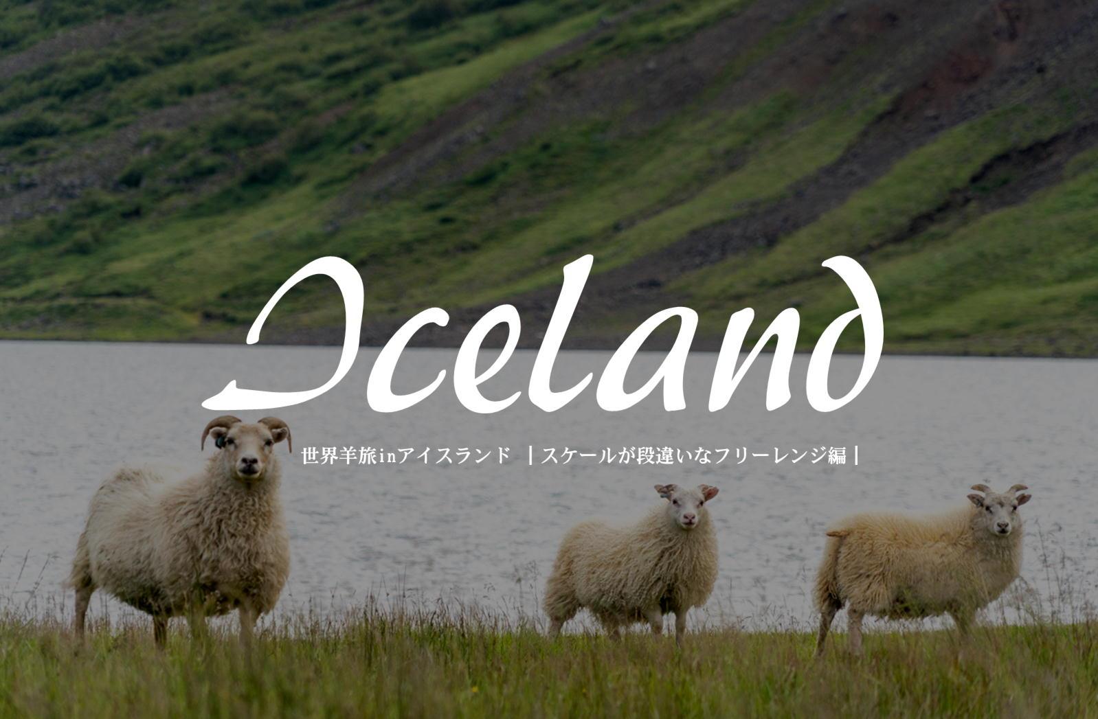 国全体が放牧地。自由過ぎるアイスランドラム。【アイスランド/レンタカーで1周】