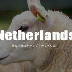羊界のサラブレット「テクセル シープ」