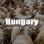 すごく強そう。ハンガリーのラツカ羊。